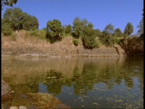 wa tree lined lake, bandhavgarh national park, india - national icon stock videos & royalty-free footage