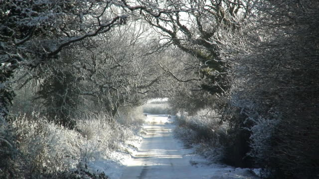 zo ws tree lined rural road in snow / castle coombe, wiltshire, england - peter snow stock videos & royalty-free footage