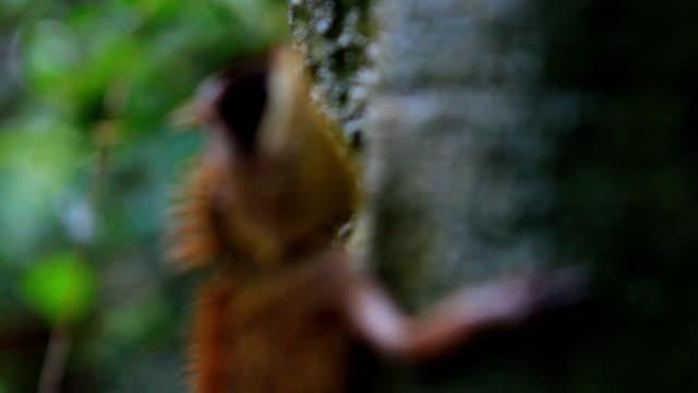 stockvideo's en b-roll-footage met tree lizard wait for it's foods - boomstronk