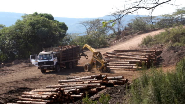 tree logging, limpopo, south africa - 環境問題点の映像素材/bロール