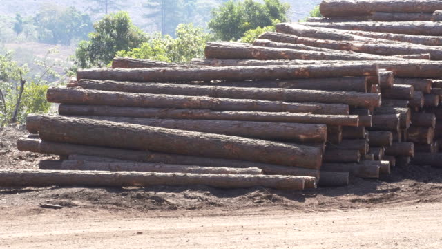 tree logging, limpopo, south africa - timber stock videos and b-roll footage