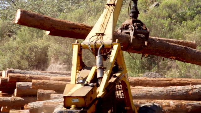 vidéos et rushes de tree logging, limpopo, south africa - tronc d'arbre