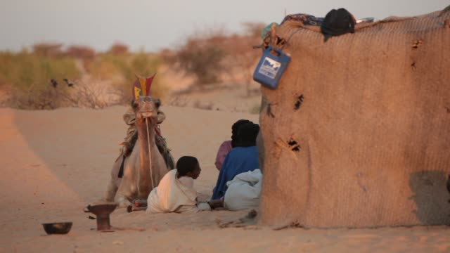 Tree man and a camel resting on the desert on December 16 2011 in Timbuktu Mali