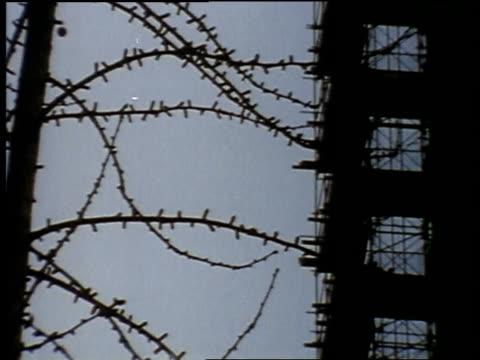 vídeos y material grabado en eventos de stock de 1957 montage tree, men working on building under construction, riding lift, climbing building / united states - 1957