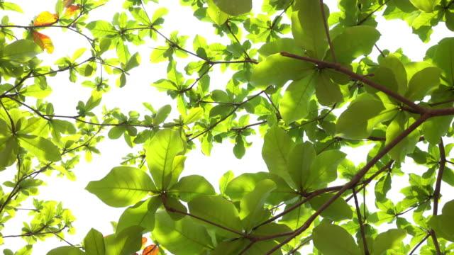 Tree nature, dolly short 4k