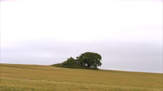 A tree on a field Skane Sweden.