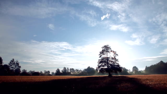 stockvideo's en b-roll-footage met hd: tree on a meadow - duurzaam toerisme