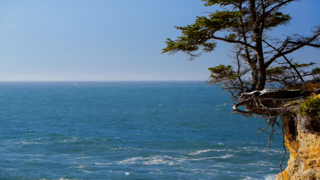 tree on cliff outcrop along coast - oregon coast stock videos & royalty-free footage