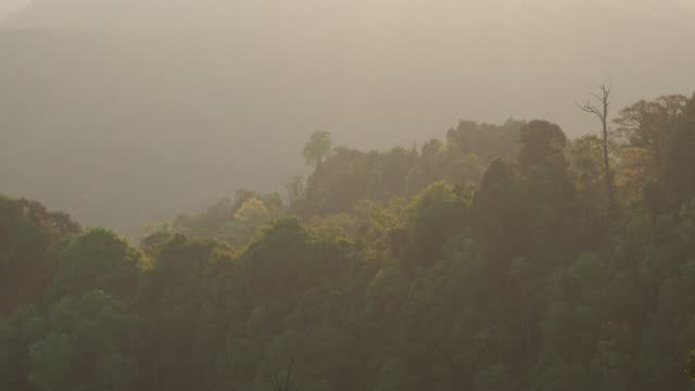 tree on mountain in tropical rainforest with sunlight - tropical tree stock videos & royalty-free footage