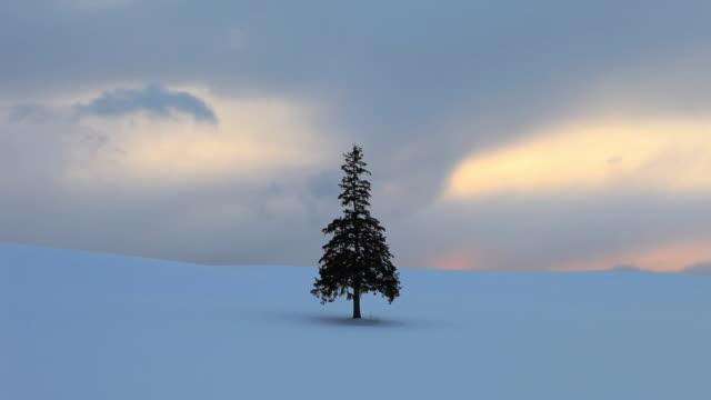 WS T/L Tree (Christmas tree) on Snow field at suset / Bie, Japan