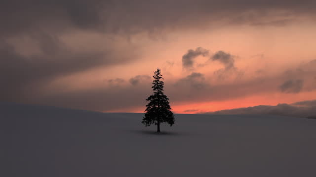 WS T/L Tree (Christmas tree) on Snow field at suset / Bie, Japan