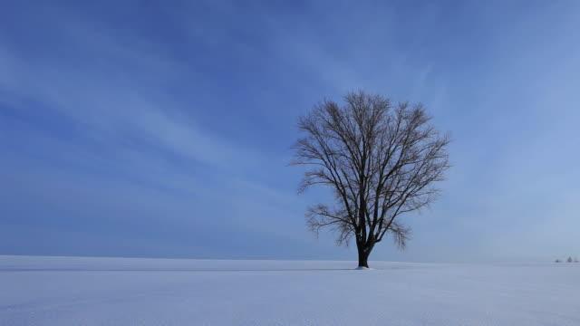 ws tree (tree of philosophy) on snow field / bie, japan - panorama stock-videos und b-roll-filmmaterial