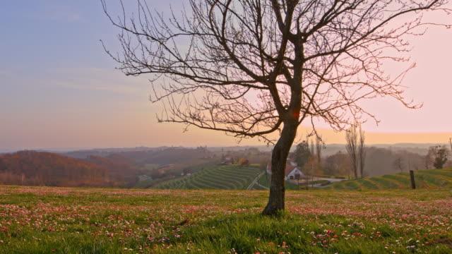 DS arbre sur le sommet de la colline