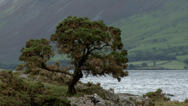 ms, tree on wast water lakeshore, lake district national park, cumbria, england - lakeshore stock videos and b-roll footage