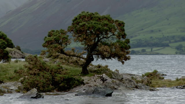 zo, ws, tree on wast water lakeshore with hills in background, lake district national park, cumbria, england - lakeshore stock videos & royalty-free footage