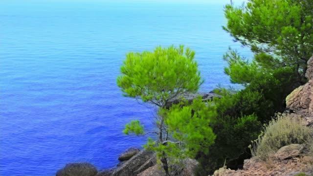 Baum auf das Meer