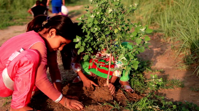 tree plantation - india video stock e b–roll