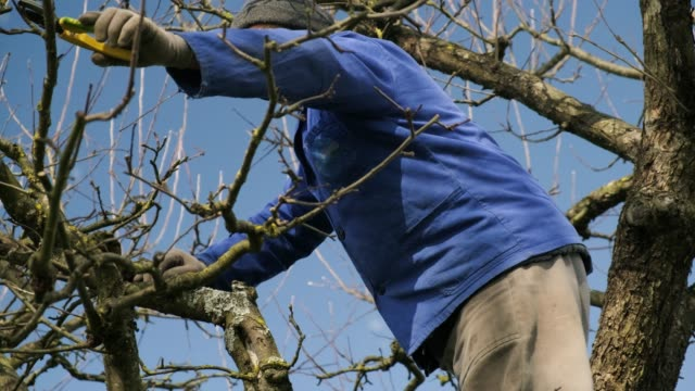 tree pruning in spring - secateurs stock videos & royalty-free footage