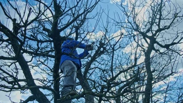 tree pruning - secateurs stock videos & royalty-free footage