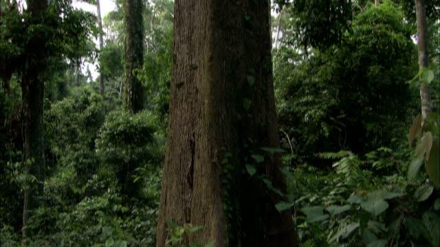a tree reaches into a jungle canopy. - 樹冠点の映像素材/bロール