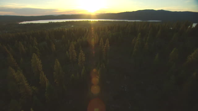 MS AERIAL Tree reveal Payette Lake and golf course with late afternoon sun / McCall, Idaho, United States