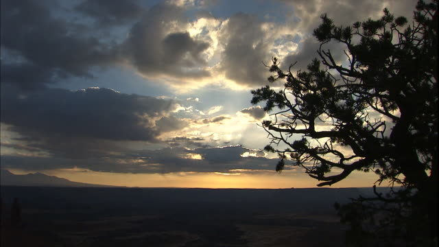 a tree rises in silhouette against a colorful sky in canyonlands national park, utah. - canyonlands national park stock videos & royalty-free footage