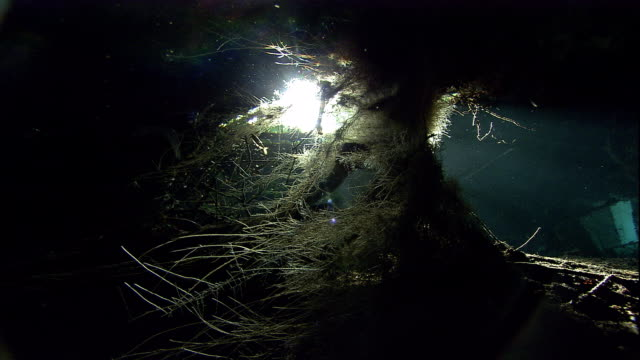 Tree roots grow down into a flooded cenote cave in Mexico. Available in HD.