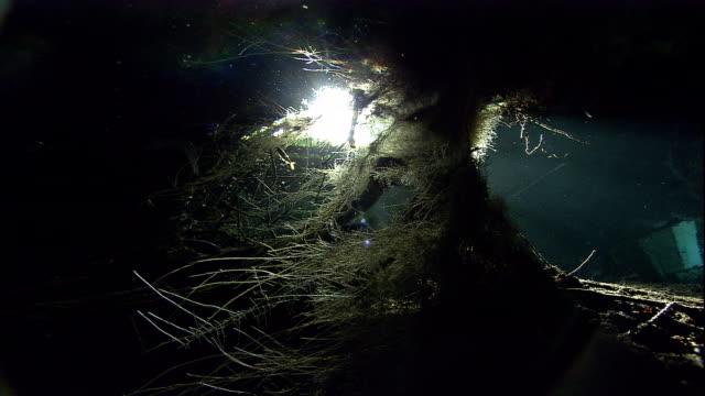 vídeos y material grabado en eventos de stock de tree roots grow down into a flooded cenote cave in mexico. available in hd. - raíz