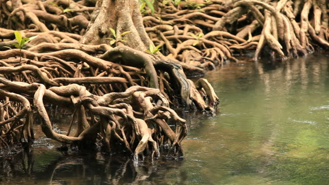 tree roots in swamp forest 1080p