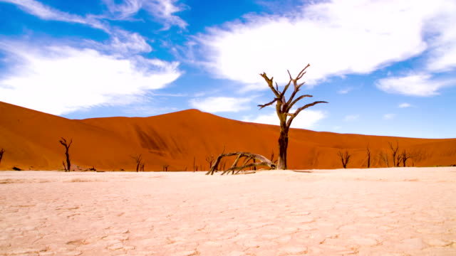 DS WS Baum Skulpturen In der Dead Vlei