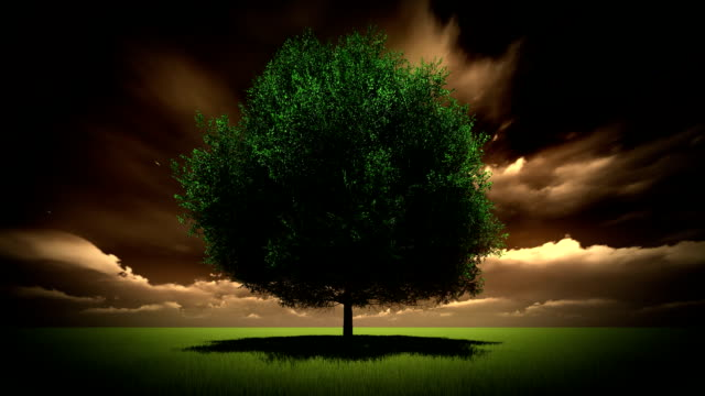 tree set against a dramatic sky anf flying bids - birds flying in v formation stock videos and b-roll footage