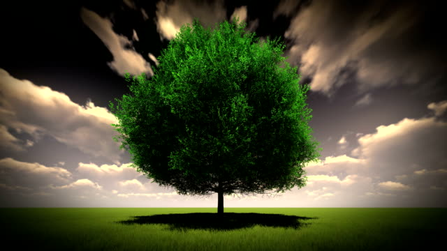 tree set against a dramatic sky - oak tree stock videos and b-roll footage