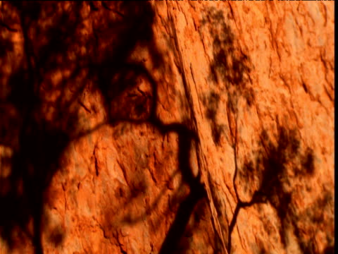 tree shadows move on glowing red sandstone wall of olgas in outback, northern territory, australia - sandstone stock videos & royalty-free footage