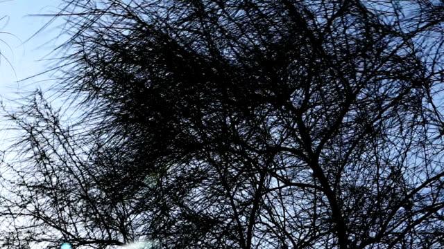 stockvideo's en b-roll-footage met boom silhouet - bare tree