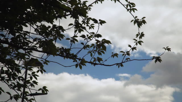 tree silhouetted against cloudy sky - blue stock videos & royalty-free footage