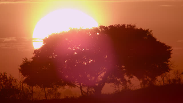 tree silhouetted by setting sun. - minas gerais stock videos and b-roll footage