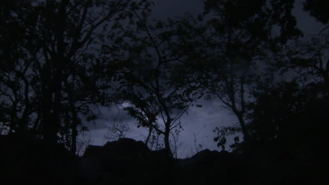 tree silhouettes rise above a dark african forest. - spooky stock videos & royalty-free footage
