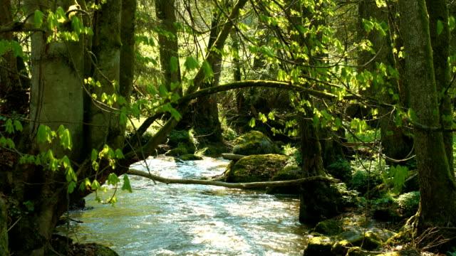 Baum auf über glitzernden Creek (4 k UHD zu/HD)