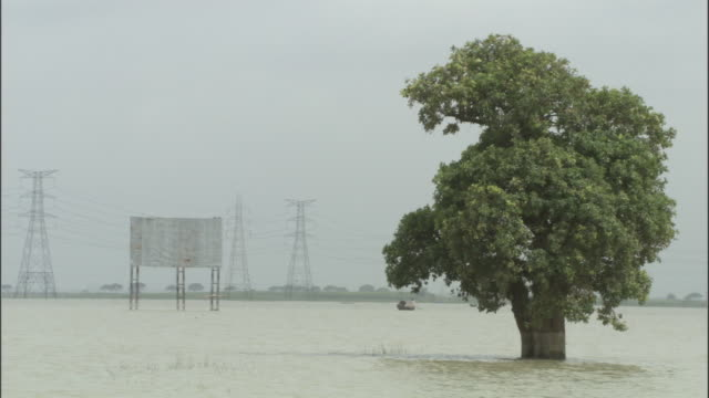 Tree stands partially submerged in flood waters Available in HD.