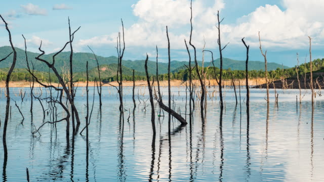 tree stump in tranquil lake with tropical mountains and blue sky background - tropical tree stock videos & royalty-free footage
