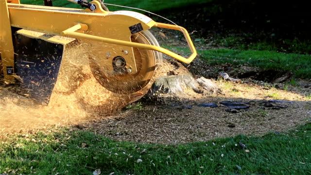 Tree Stump Removing