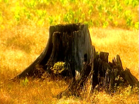 stockvideo's en b-roll-footage met tree stump - boomstronk