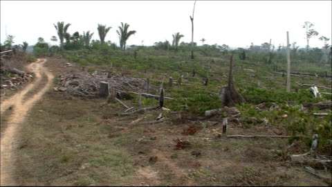 tree stumps, debris, and weeds cover the ground in a clear-cut rainforest near a dirt road. amazon-jungle - forestry industry stock videos & royalty-free footage
