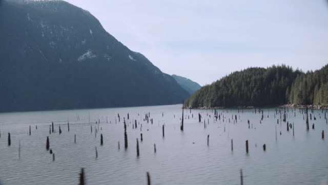 aerial tree stumps from sunken forest protruding from lake, snow-capped mountain beyond - baumstumpf stock-videos und b-roll-filmmaterial