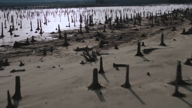 aerial tree stumps from sunken forest protruding from lake - cricket stump stock videos & royalty-free footage