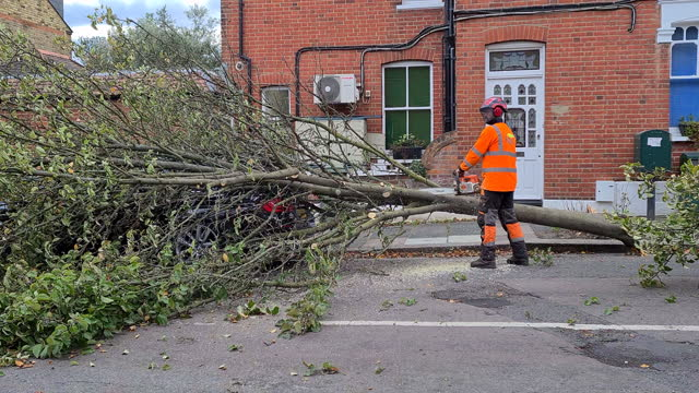 tree surgeon cuts tree that fell on bmw car parked on side of palmerston road in richmond-upon-thames after high winds, london, united kingdom -... - surgeon stock videos & royalty-free footage