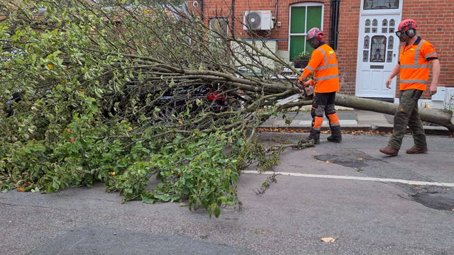 tree surgeons cut tree that fell on bmw car parked on side of palmerston road in richmond-upon-thames after high winds, london, united kingdom -... - surgeon stock videos & royalty-free footage