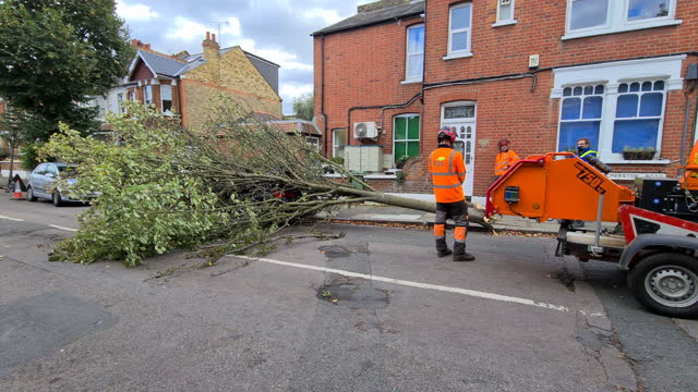 tree surgeons in discussions before attempting to cut tree that fell on bmw car parked on side of palmerston road in richmond-upon-thames after high... - surgeon stock videos & royalty-free footage