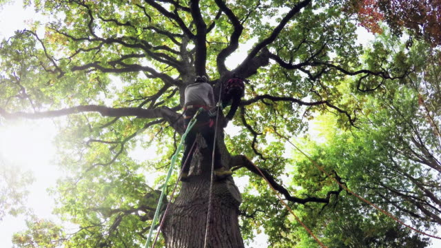 tree surgeons - 園芸学点の映像素材/bロール