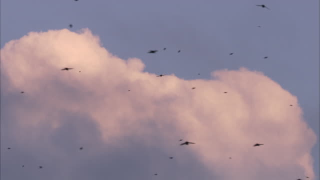 tree swallows dart across a cloudy blue sky. - a mezz'aria video stock e b–roll